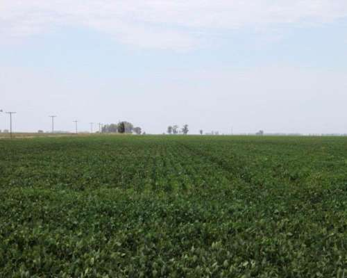 Lp0152 Venta Agricola 300 Has Chapaleufu, la Pampa