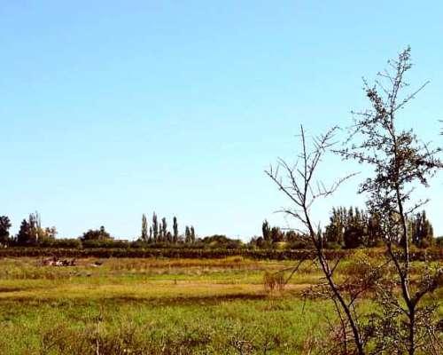 Fincas de 31, 64, 95 y 100 Has en San Rafael Mendoza
