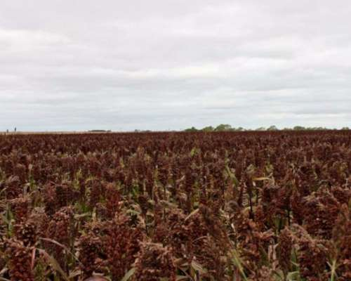 Venta de Campo Agricola 650 Has Gualeguaychú, Entre Ríos