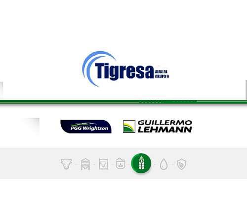 Alfalfa Tigresa - Semilla Forrajera PGG Wrightson Seeds