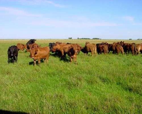 Agrícola en la Mejor Zona de Gualeguaychu con Todas las M.j.