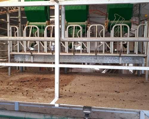 Liquido Equipamiento para Tambo para Cabras Consultar