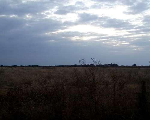 Matorrales 120 Has Agricola