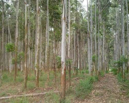 Campo Forestal y Bosque Brasilero Unico en Entre Rios