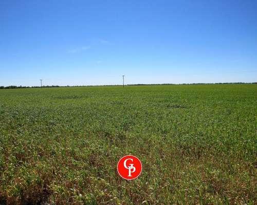 En Venta, 2.615 Has. Caleufu, la Pampa -