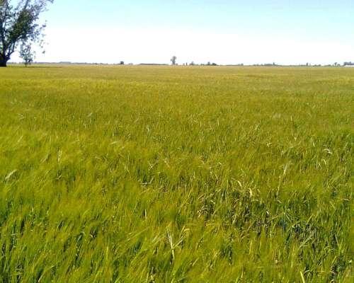 Campo Agrícolas, en San Genaro