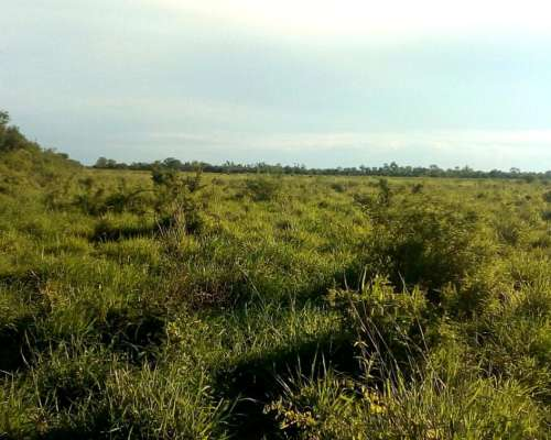 Oportunidad 3200 Ha en Corrientes