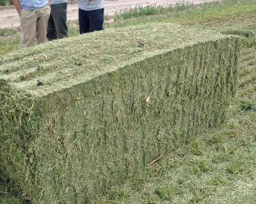 Megafardos Alfalfa de Alta Calidad, Tambos, Feedlot