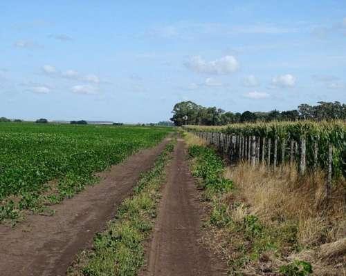 Campo Venta 330 Has. Agricola Balcarce
