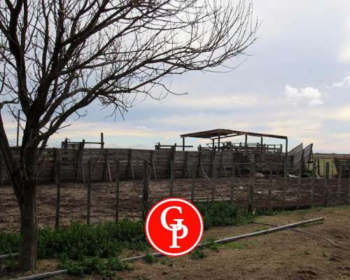 En VENTA,3.600 Has, la Maruja -LA Pampa -
