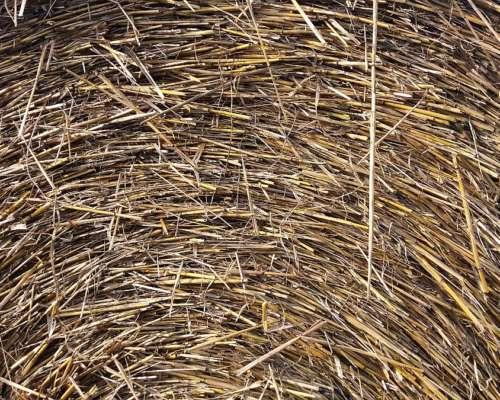 Rollos de Avena C/semilla - Trigo y Avena de Rastrojo