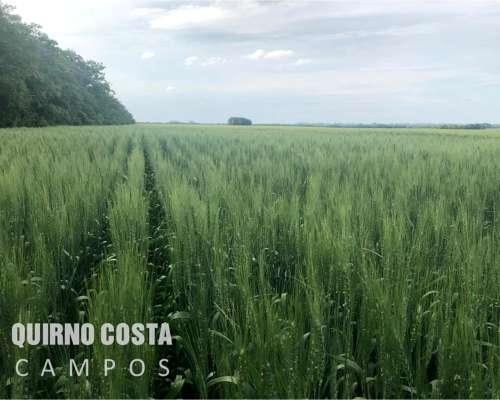 Excelente Campo S Antonio Areco 82 Has Muy Bien Ubicado