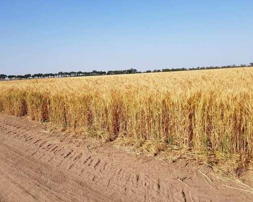 Alquilo Campo Agricola 100%