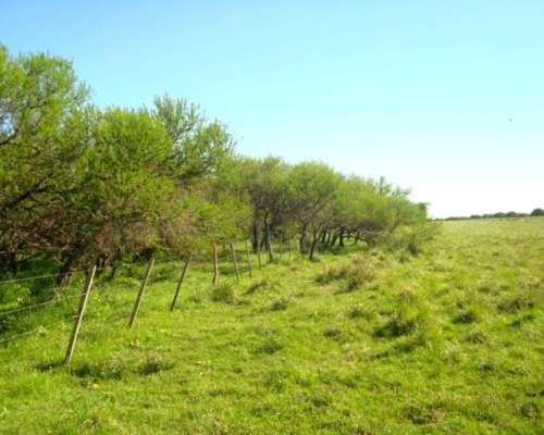 2000 Hectareas de Campo Mixto