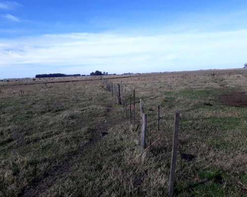 Campo Ganadero en Rauch