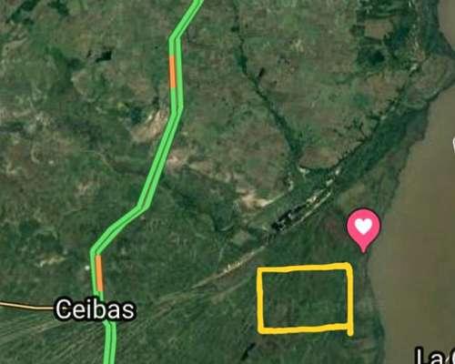 Venta Campo Ganadero en Ceibas, Entre Ríos, 1600 Has.