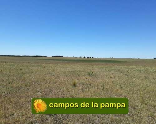 La Pampa - Venta Campo 260 Ha Apto Agricultura - Ganaderia