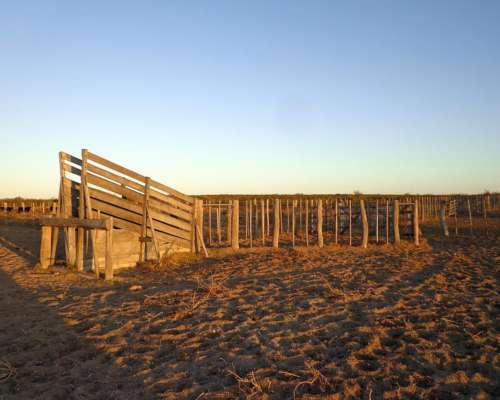 En Venta 10.000 Has, Lihuel Calel - la Pampa -