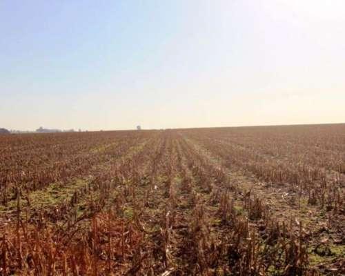 Er0253 Venta Agricola 440 Has Gualeguay, Entre Ríos