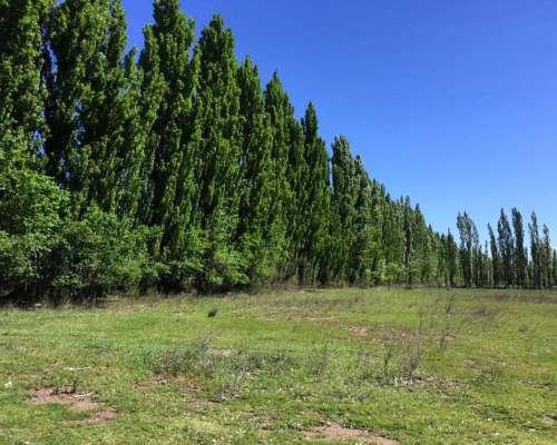 Chacra con Cabañas en 25 de Mayo la Pampa - con Escritura