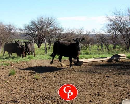 En Venta, 2.500 Has, General Acha, La Pampa.-