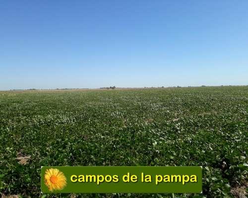 La Pampa - Campo 220 Ha Agricolas - Departamento Realico
