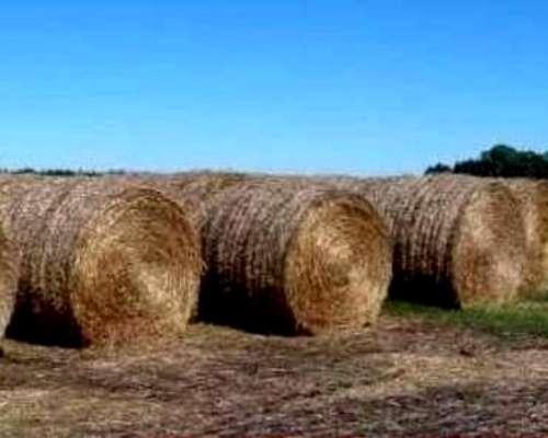 Rollos de Pastura Grama
