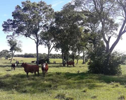 Excelente Estancia de 6.800 Has. en Corrientes.