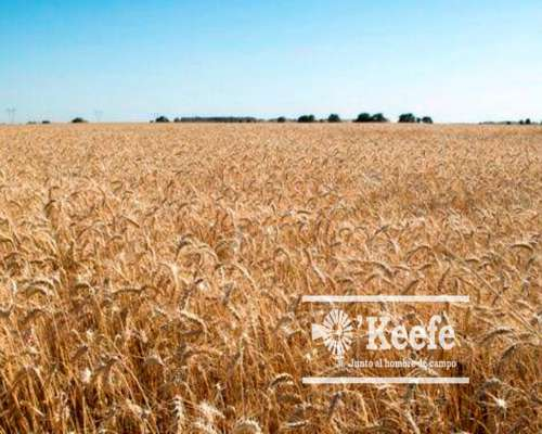 1000 Has. Campo Agrícolas, en Lamadrid Renta Asegurada