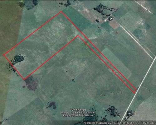 Campo Sobre Asfalto Apto Avicultura/feedlots 120 km Caba