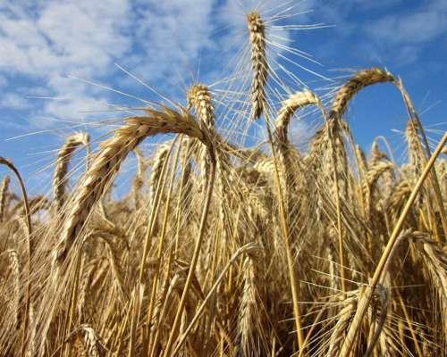 Se Alquila en Zona de Loberia 3600 Has Agricolas para 2020