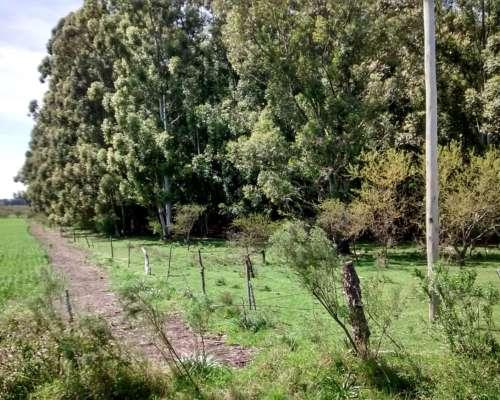 Chacra Rodeada de Bosques de Eucaliptus