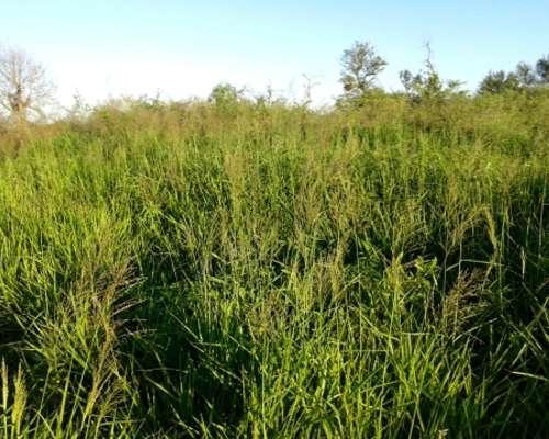 Campo Agricola y Ganadero en Icaño S. del Estero con Riego
