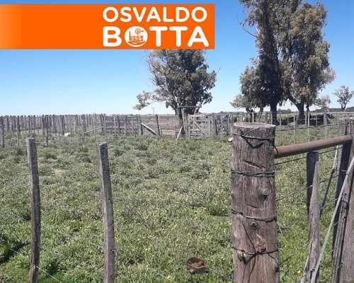 279 Has en Torquinst, Buenos Aires
