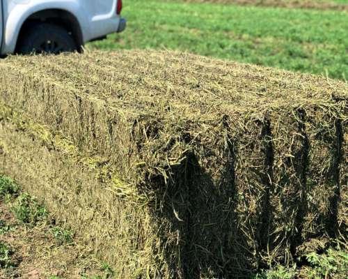 Megafardos, Rollos y Fardos de Alfalfa Calidad Premiun